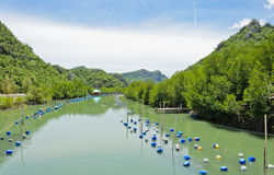 Landscape with shrimp farm Stock Photos