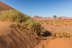 Landscape with shrubs and red dunes in the Namibia desert. Sossusvlei. Africa stock images