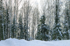 Landscape of the Siberian taiga Royalty Free Stock Photography