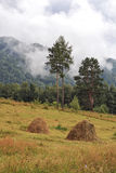 Landscape-Siberian taiga, mountains and mist Stock Photos