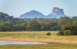 Landscape with Sigiriya Rock Stock Photos