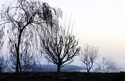 Landscape with silhouettes of leafless trees in a blue dawn. Four silhouettes of leafless trees in a row in a blue dawn stock photography