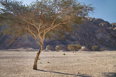 Landscape of Sinai, Egypt, North Africa Royalty Free Stock Photography