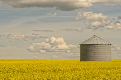 Canola Field with Grain Silo Royalty Free Stock Photography