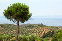 Landscape Sithonia Halkidiki Greece Royalty Free Stock Photo