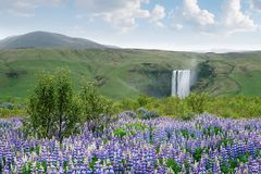 Landscape with Skogafoss waterfall, Iceland royalty free stock photo