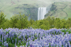Landscape with Skogafoss waterfall, Iceland Royalty Free Stock Images