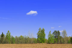 Landscape with sky. Beautiful rural landscape with green vegetation and the bright sky Royalty Free Stock Photography