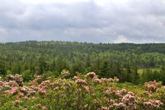 Landscape and sky at Dolly Sods wilderness, West Virginia, USA. The Dolly Sods Wilderness is a U.S. Wilderness Area in the Allegheny Mountains of eastern West Stock Photography