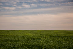 Landscape sky and grass Royalty Free Stock Images