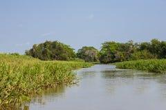 Landscape of Sky,Jungle and River, Pantanal, Brazil Royalty Free Stock Photography