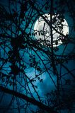 Landscape of sky with super moon behind silhouette of tree branc. Night landscape of sky and super moon with bright moonlight behind silhouette of tree branch stock photo