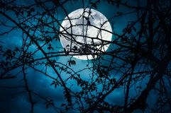 Landscape of sky with super moon behind silhouette of tree branch. royalty free stock photos
