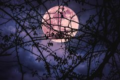 Landscape of sky with super moon behind silhouette of tree branch. Night landscape of sky and super moon with bright moonlight behind silhouette of tree branch royalty free stock photo