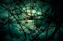 Landscape of sky with super moon behind silhouette of tree branch royalty free stock photos
