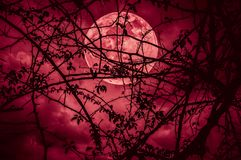 Landscape of sky with super moon behind silhouette of tree branch. Night landscape of sky and super moon with bright moonlight behind silhouette of tree branch stock image