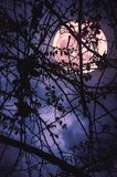 Landscape of sky with super moon behind silhouette of tree branch. Night landscape of sky and super moon with bright moonlight behind silhouette of tree branch royalty free stock photos
