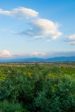 Landscape / skyscape with a lot of green bushes and grass - Bulgaria Stock Photography