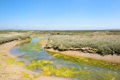 Landscape Slufter at Dutch Texel Stock Photography