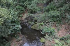 Landscape with a small brook and green trees. A landscape with a small brook and green trees Royalty Free Stock Image