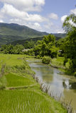 Landscape with a small river Royalty Free Stock Image