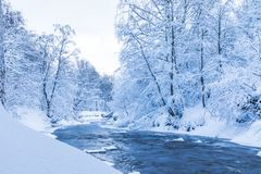 The landscape of the small river or the brook in the beautiful winter forest or in the park royalty free stock photos