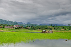 Landscape with small river life, Asia Royalty Free Stock Images