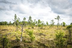 Landscape with small trees in the wilderness royalty free stock photography