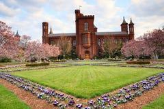 Smithsonian Magnolia Spring Garden Washington, DC Royalty Free Stock Images