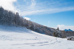 Landscape with snow Royalty Free Stock Images