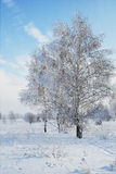 Landscape in snow against blue sky. Winter scene. Stock Image