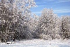 Landscape in snow against blue sky. Winter scene. Royalty Free Stock Image