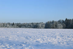Landscape of snow-covered field and trees are spruce and birch Stock Photos