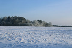 Landscape of snow-covered field and trees are spruce and birch Stock Photography