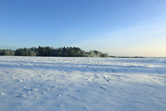 Landscape of snow-covered field and trees are spruce and birch Stock Images
