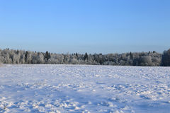 Landscape of snow-covered field and trees are spruce and birch Stock Image