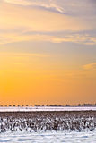 Landscape with snow covered fields Royalty Free Stock Photos