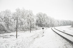 Landscape with snow-covered trees Stock Image
