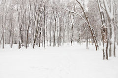 Landscape with snow-covered trees Royalty Free Stock Image