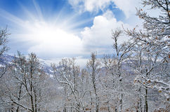 Landscape with snow covered trees and sunshine Stock Photos