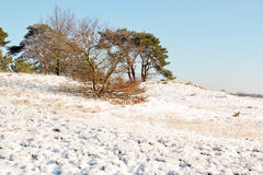 Landscape with snow. Stock Photos