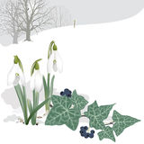 Landscape with Snowdrops and Ivy - Background. Stock Photography