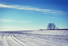 Landscape with snowed cultivated agricultural field in winter Stock Image