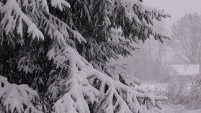 Landscape with snowfall on fir tree in morning stock video footage