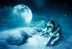 Landscape at snowfall with super moon. Serenity nature background. Photo Manipulation. Landscape at snowfall with super moon. Majestic night with full moon on stock photo