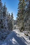 Snowy empty road in the coniferous forest in Sunny winter day. Landscape with a snowy empty road in the dense coniferous forest in Sunny winter day Stock Photography
