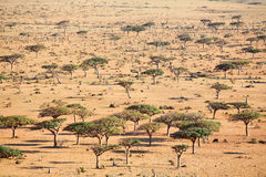Landscape on Socotra island Stock Photo