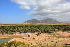 Socotra island. Landscape of Socotra island, Yemen. River, palm trees plantation and high mountain on background Stock Photo