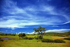 landscape sommaren Arkivbilder