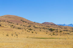 Landscape from South Africa, Dragon`s mountains Stock Photos